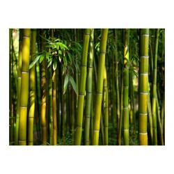 Fototapet - Asiatisk bambus...