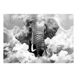 Fototapet - Elephant in the...