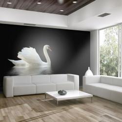 Fototapet - swan (black and...