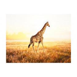 Fototapet - giraf - gå