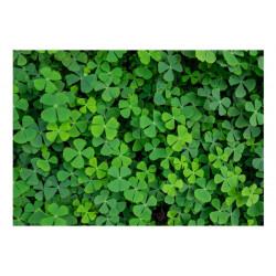 Fototapet - Green Clover