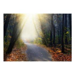Fototapet - Road through...