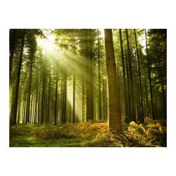 Fototapet - Pine skov