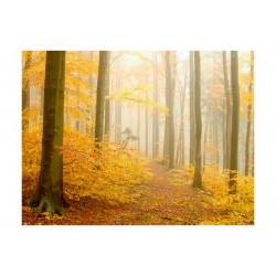 Fototapet - skov - efterår