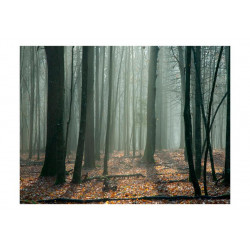 Fototapet - Witches' forest