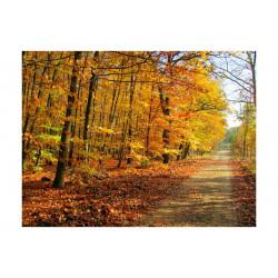 Fototapet - Beech forest