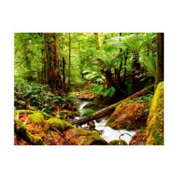 Fototapet - Rainforest