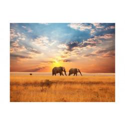 Fototapet - Afrikanske...