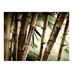 Fototapet - Fog and bamboo...