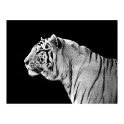 Fototapet - Hvid tiger