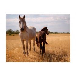 Fototapet - Horse and foal