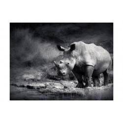 Fototapet - Næsehorn tabte...