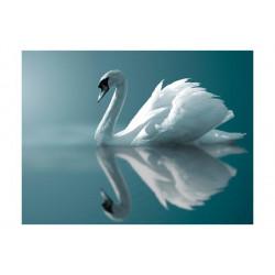 Fototapet - Hvid svane