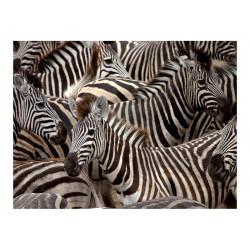 Fototapet - Herd af zebraer