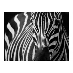 Fototapet - Hvid med sorte...