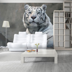 Fototapet - Bengali tiger i...