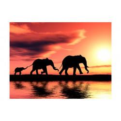 Fototapet - elephants: family