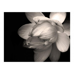 Fototapet - Lotus flower