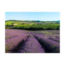 Fototapet - Lavendelmarker