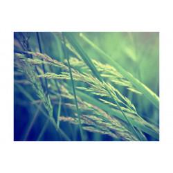 Fototapet - Cereal field