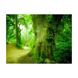 Fototapet - Forest vej