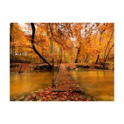 Fototapet - Autumn bro