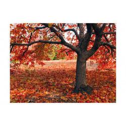 Fototapet - Træ i efteråret