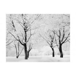 Fototapet - Træer -...
