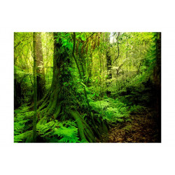 Fototapet - Jungle