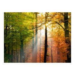 Fototapet - Smukke efterår