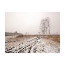 Fototapet - Winter field