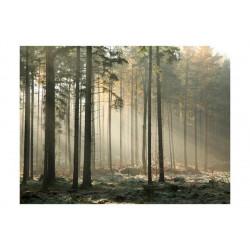 Fototapet - Foggy November...