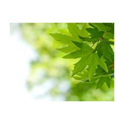 Fototapet - leaves (Shallow...