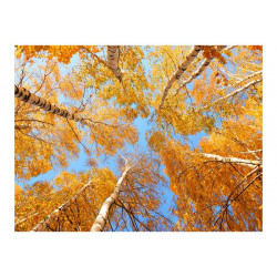 Fototapet - Autumnal trætoppe