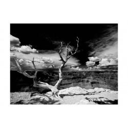 Fototapet - Grand Canyon træ