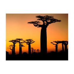 Fototapet - Afrikansk...