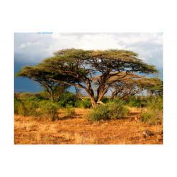 Fototapet - Samburu, Kenya