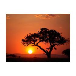 Fototapet - Afrika: solnedgang