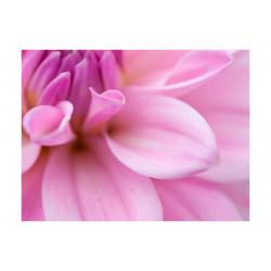 Fototapet - Blomsterblade -...