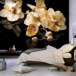 Fototapet - Orchids in ecru...
