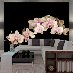 Fototapet - Blooming orkidé