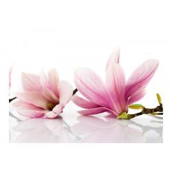 Fototapet - Magnolia blomst