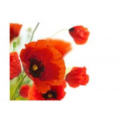 Fototapet - Poppies on the...