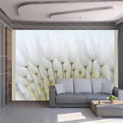 Fototapet - Dandelion skov