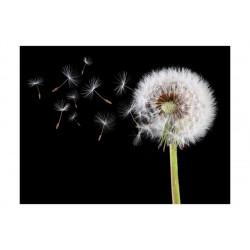 Fototapet - Wind and dandelion