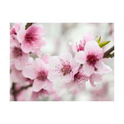 Fototapet - Spring,...