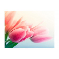 Fototapet - Spring and tulips