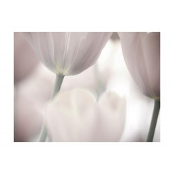 Fototapet - Tulips fine art...