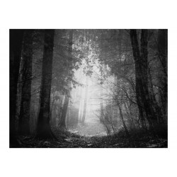 Fototapet - Forest of Shadows