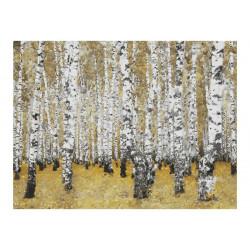 Fototapet - Autumnal birkeskov